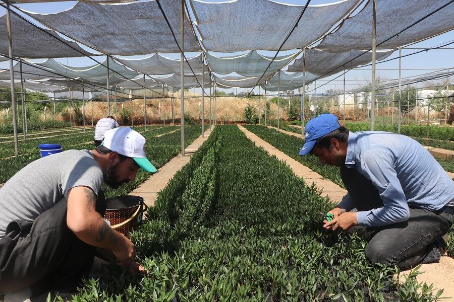 Gaziantep'te Bahçecilik Subtropik Fidan Yetiştiriciliği Mesleğinde Eğitim Kursu Açıldı