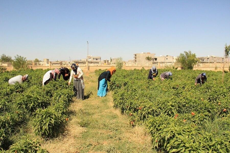 Mardin'de Mesleki Eğitim Kursu Açtık