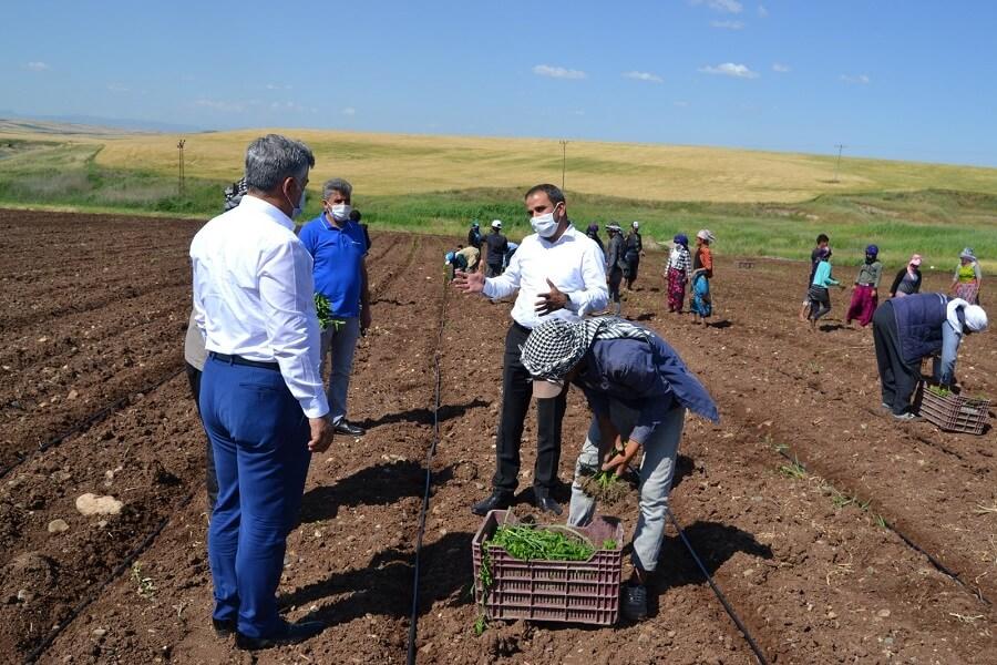 Diyarbakır'da Mevsimlik İşçilerle Bir Araya Geldik